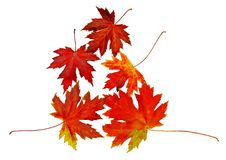 Free Autumn Leaves Stock Images - 7056254