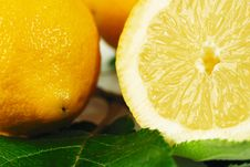 Free Citrus Royalty Free Stock Photography - 7056467