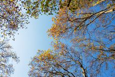 Free Autumn Trees Royalty Free Stock Photo - 7057505