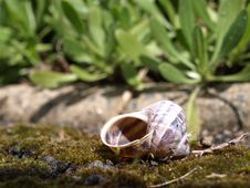 Free Shell Stock Photography - 7058162