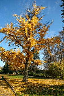 Free Beautiful Fall Color Tree Stock Image - 7059331