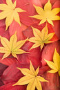 Free Autumn Background From Red And Yellow Leaves Royalty Free Stock Images - 7060679