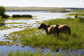 Free Horses Stock Photos - 7061573