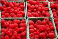 Free Fresh Red Raspberries Stock Images - 7061994