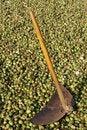 Free Cotton And Farm Tool Stock Photo - 7066660