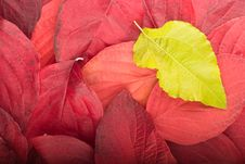 Free Autumn Background From Red And Green Leaves Stock Images - 7060634