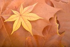 Autumn Background From Maple Leaves Royalty Free Stock Images