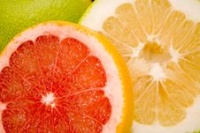 Free Grapefruits Stock Photo - 7060920