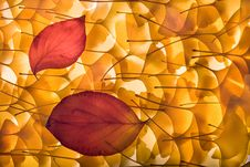 Free Autumn Background With Gingko Biloba, Red Leaves Royalty Free Stock Photography - 7060957