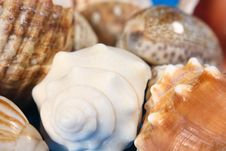 Shells -Close Up Stock Images