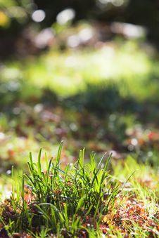 Free Grass Royalty Free Stock Photo - 7062075