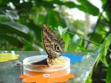 Free Butterfly Stock Photo - 7062130