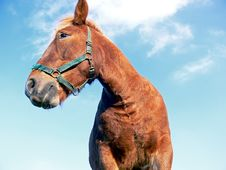Free Horse Close-up Stock Photography - 7062322
