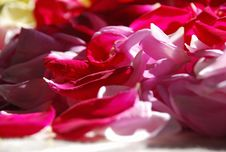 Free Background Of Rose-leaves Stock Images - 7062434