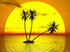Free Red Sunset & Palm Royalty Free Stock Photography - 7064627
