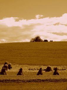 Free Ground Landscape Royalty Free Stock Photos - 7065078