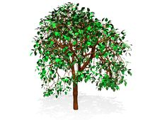 Free Tree Royalty Free Stock Photography - 7065847