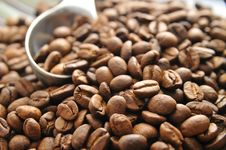 Free Coffee Beans Royalty Free Stock Photography - 7066197