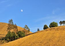 Free Golden Grassy Hill With Moon Stock Images - 7066734