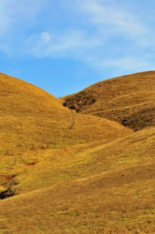 Free Golden Grassy Hill With Moon Royalty Free Stock Photo - 7066755