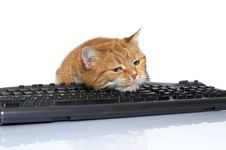 Red Cat Lays On The Keyboard Royalty Free Stock Photos
