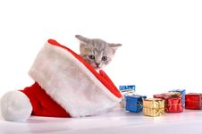 The Kitten Plays With Gifts Stock Image