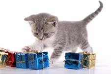 The Kitten Plays With Gifts Royalty Free Stock Photo
