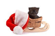Free Kitten Plays On A White Background Stock Photo - 7067080