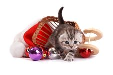 Free Kitten Plays On A White Background Stock Image - 7067081