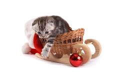 Free Kitten Plays On A White Background Royalty Free Stock Photography - 7067127