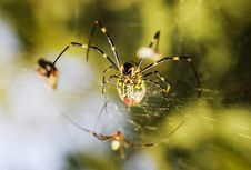 Free Spider Royalty Free Stock Photos - 7067548