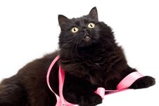 Free Black Cat With Pink Ribbon Isolated Stock Photos - 7068503
