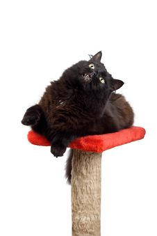 Free Black Cat Playing Isolated Stock Image - 7068981