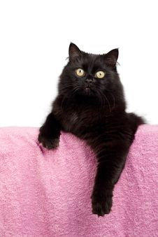 Cute Black Cat Isolated Stock Photo