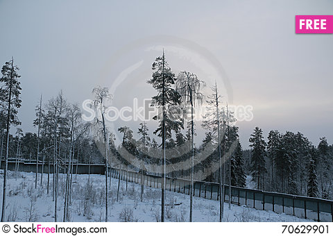 Free Trees In Cold Winter Day Stock Image - 70629901