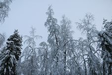 Trees In Cold Winter Day Royalty Free Stock Photos