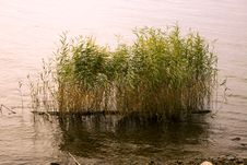 Free Swamp Grass Stock Photography - 7070532