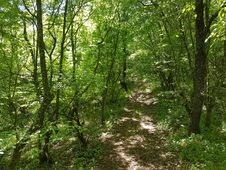 Free Forest Path Royalty Free Stock Image - 70830346