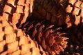 Free Pine Cone, Closeup Of Pine Cones, Plant, Tree, Macro Stock Image - 70960041