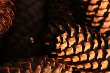 Pine Cone, Closeup Of Pine Cones, Plant, Tree, Macro Stock Photography