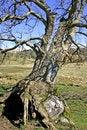 Free Ancient Tree Stock Photography - 714052