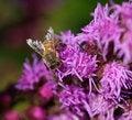 Free Pollination Royalty Free Stock Photo - 715835