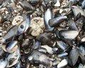 Free Shells Stock Photos - 717233