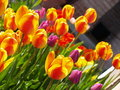 Free Garden Of Tulips Stock Images - 717944