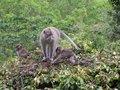 Free Monkeys Stock Photos - 718783