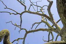 Free Old Tree Stock Photo - 710130