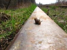 Free Snail Lifetime Stock Photos - 710903