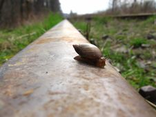 Free Snail Lifetime Royalty Free Stock Images - 710919