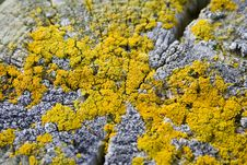 Free Yellow Lichen On Wooden Post Stock Image - 711281
