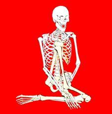 Free Bone 262 Stock Photography - 711722